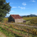 Healdsburg Homes for Sale